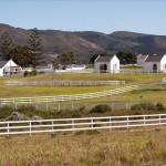 Riethuiskraal Stud Farm