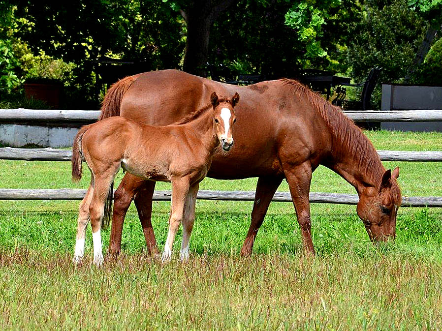 Trippi CH filly x Epic Style, born 05 September 2015